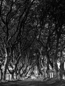 Dark Hedges red